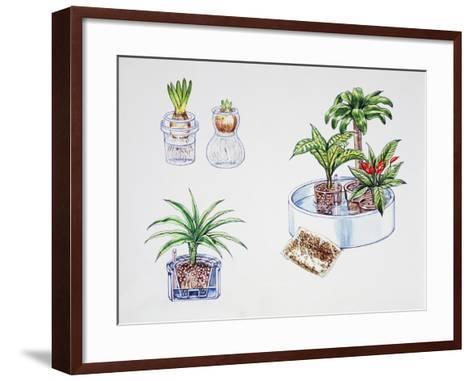 Hydroculture, Growing of Plants in a Soilless Medium or an Aquatic Based Environment--Framed Art Print