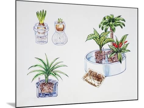 Hydroculture, Growing of Plants in a Soilless Medium or an Aquatic Based Environment--Mounted Giclee Print