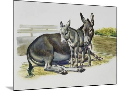 Foal and Jenny of African Wild Ass or African Wild Donkey (Equus Africanus), Equidae--Mounted Giclee Print