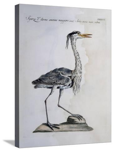 Grey Heron (Ardea Cinerea), Coloured from History of Birds, 1767--Stretched Canvas Print