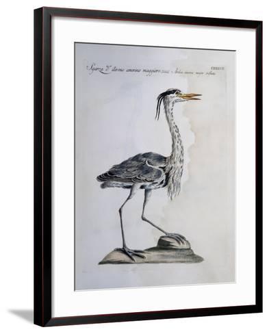Grey Heron (Ardea Cinerea), Coloured from History of Birds, 1767--Framed Art Print