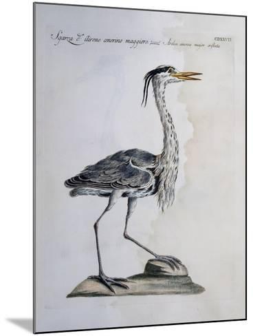 Grey Heron (Ardea Cinerea), Coloured from History of Birds, 1767--Mounted Giclee Print