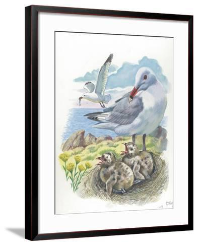 AudouinS Gull Ichthyaetus or Larus Audouinii with Chicks in Nest--Framed Art Print