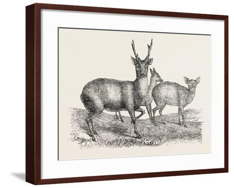 The Earl of Derby's Menagerie, at Knowsley, Uk: Male and Female Hog Deer--Framed Art Print