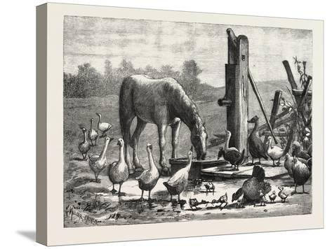 A Fashionable Watering Place. Horse, Geese, Chicken, Outdoor, Farm, 1876--Stretched Canvas Print