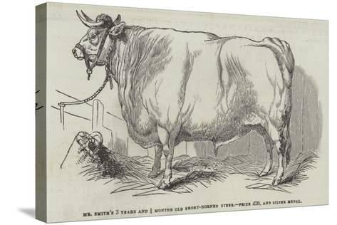 Mr Smith's 3 Years and 3/4 Months Old Short-Horned Steer, Prize £20, and Silver Medal--Stretched Canvas Print