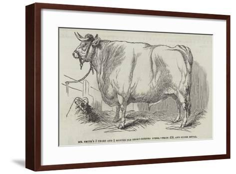 Mr Smith's 3 Years and 3/4 Months Old Short-Horned Steer, Prize £20, and Silver Medal--Framed Art Print