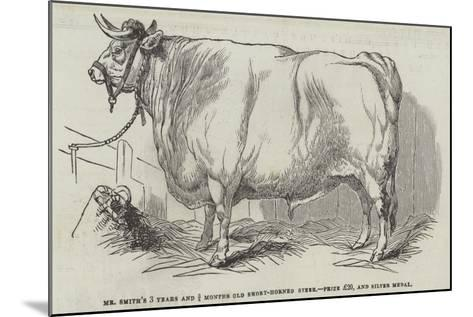 Mr Smith's 3 Years and 3/4 Months Old Short-Horned Steer, Prize £20, and Silver Medal--Mounted Giclee Print