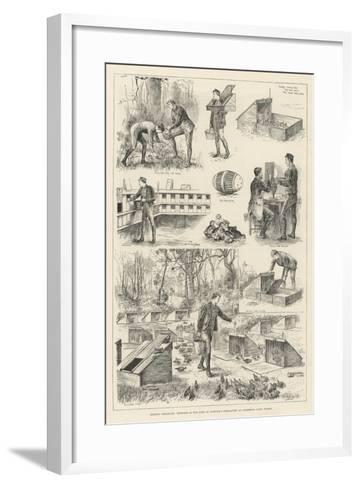 Rearing Pheasants, Sketches at the Duke of Norfolk's Pheasantry at Angmering Park, Sussex--Framed Art Print