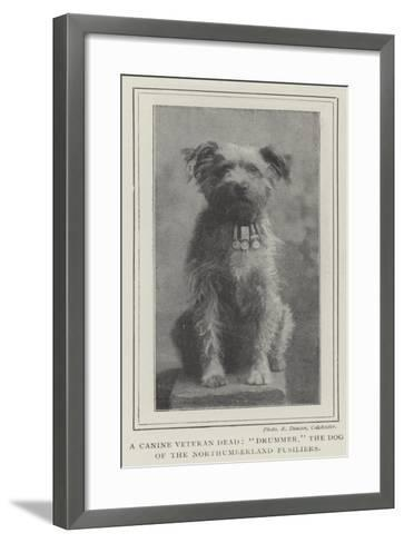 A Canine Veteran Dead, Drummer, the Dog of the Northumberland Fusiliers--Framed Art Print