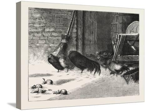 Waiting for a Break. 1876, Chicken, Chickens, Bird, Birds, Fowl, Fowls--Stretched Canvas Print