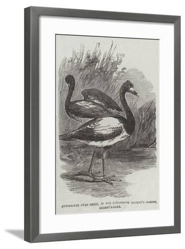 Australian Swan Geese, in the Zoological Society's Garden, Regent'S-Park--Framed Art Print
