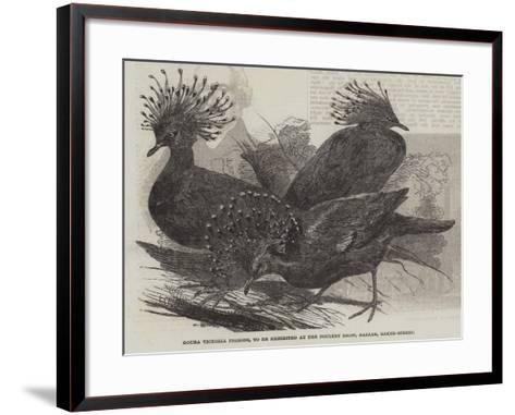 Goura Victoria Pigeons, to Be Exhibited at the Poultry Show, Bazaar, Baker-Street--Framed Art Print
