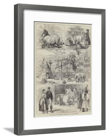 Prize Animals at the International Cattle Show of the Vienna Exhibition--Framed Art Print