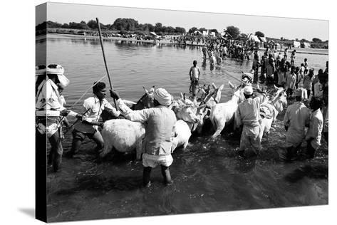 Donkeys and Men Crossing Sabarmati River, Vautha Fair, Gujarat, India, 1983--Stretched Canvas Print