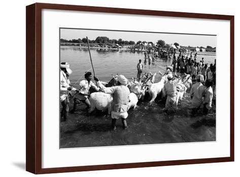 Donkeys and Men Crossing Sabarmati River, Vautha Fair, Gujarat, India, 1983--Framed Art Print