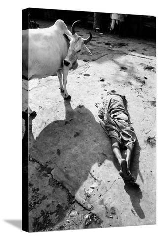 Prostrate Man Praying and Cow, Jagannath Temple, Puri, Orissa, India, 1977--Stretched Canvas Print