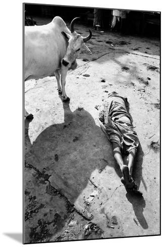 Prostrate Man Praying and Cow, Jagannath Temple, Puri, Orissa, India, 1977--Mounted Photographic Print