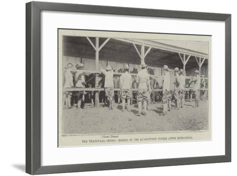 The Transvaal Crisis, Horses in the Quarantine Stable after Detraining--Framed Art Print