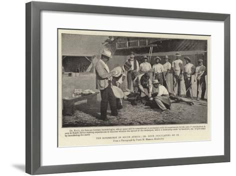The Rinderpest in South Africa, Dr Koch Inoculating an Ox--Framed Art Print
