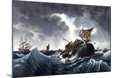 Whale Destroying Whaling Ship, C.1875--Mounted Giclee Print