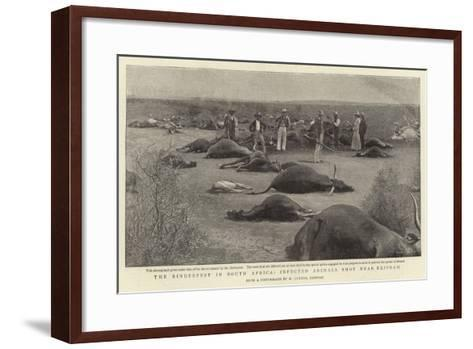 The Rinderpest in South Africa, Infected Animals Shot Near Klipdam--Framed Art Print