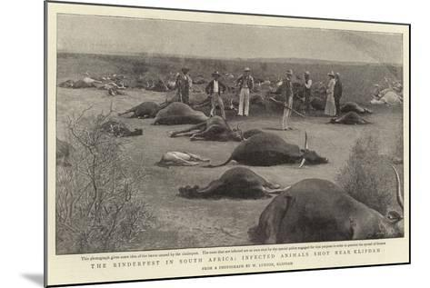 The Rinderpest in South Africa, Infected Animals Shot Near Klipdam--Mounted Giclee Print