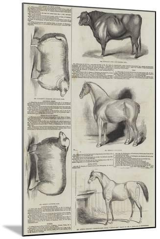 Prize Animals at the Royal Society of England Meeting at Derby--Mounted Giclee Print