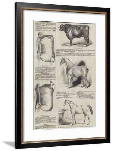 Prize Animals at the Royal Society of England Meeting at Derby--Framed Art Print