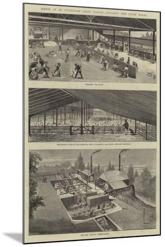 Scenes at an Australian Sheep Station, Collaroy, New South Wales--Mounted Giclee Print