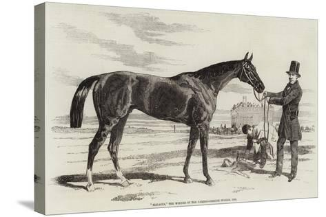 Malacca, the Winner of the Cambridgeshire Stakes, 1856--Stretched Canvas Print