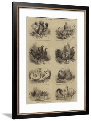 Prize Poultry and Pigeons, at the Anerley Exhibition--Framed Art Print
