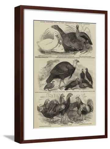 Prize Poultry, Etc, at the Zoological Society's Gardens--Framed Art Print
