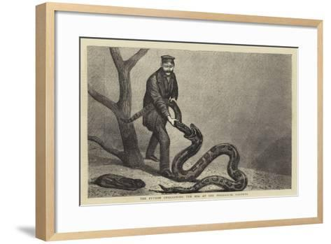 The Python Swallowing the Boa at the Zoological Gardens--Framed Art Print