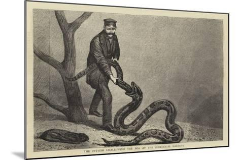 The Python Swallowing the Boa at the Zoological Gardens--Mounted Giclee Print