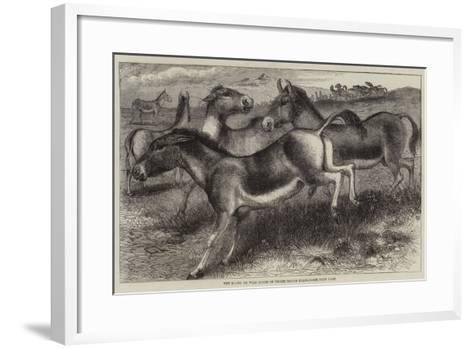 The Kiang, or Wild Horse of Thibet, Equus Kiang--Framed Art Print