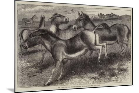 The Kiang, or Wild Horse of Thibet, Equus Kiang--Mounted Giclee Print
