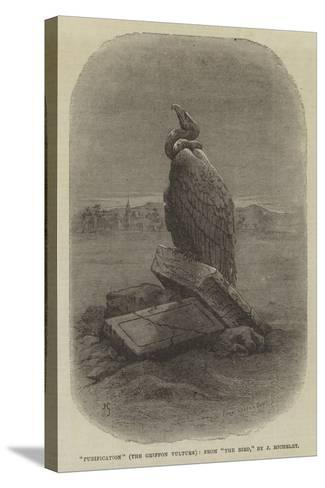 Purification (The Griffon Vulture), from The Bird--Stretched Canvas Print