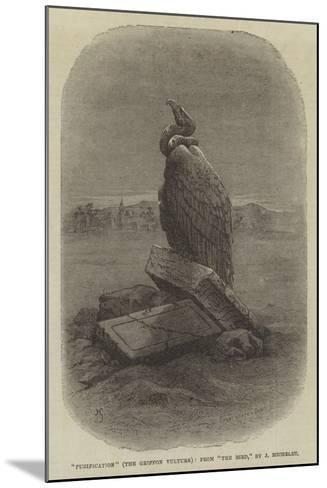 Purification (The Griffon Vulture), from The Bird--Mounted Giclee Print