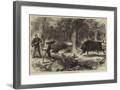 Wild Bull Shooting in the Galapagos Islands--Framed Art Print