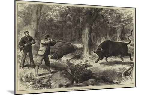 Wild Bull Shooting in the Galapagos Islands--Mounted Giclee Print