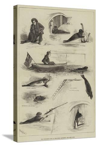 The Performing Seal at the Royal Aquarium--Stretched Canvas Print