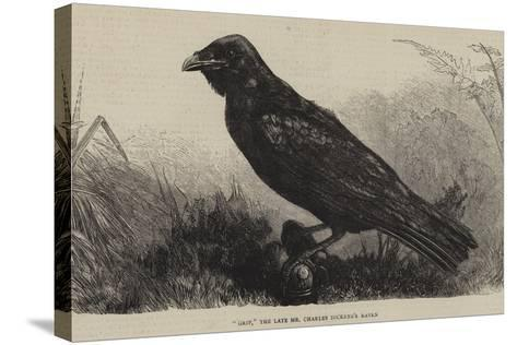 Grip, the Late Mr Charles Dickens's Raven--Stretched Canvas Print