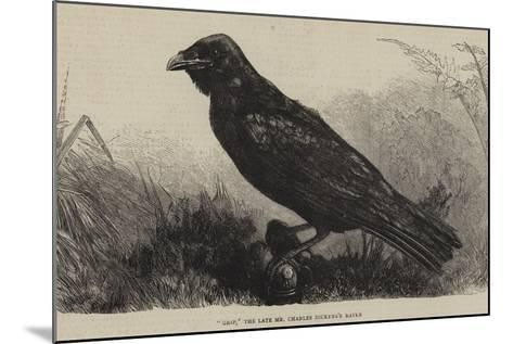 Grip, the Late Mr Charles Dickens's Raven--Mounted Giclee Print