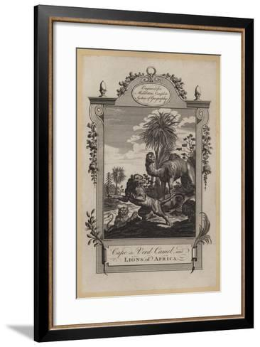Cape De Verd Camel, and Lions of Africa--Framed Art Print
