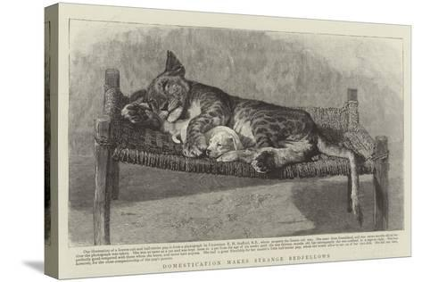 Domestication Makes Strange Bedfellows--Stretched Canvas Print
