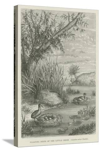 Floating Nests of the Little Grebe--Stretched Canvas Print