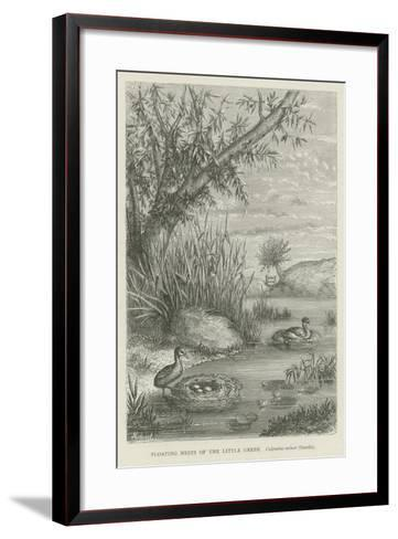 Floating Nests of the Little Grebe--Framed Art Print