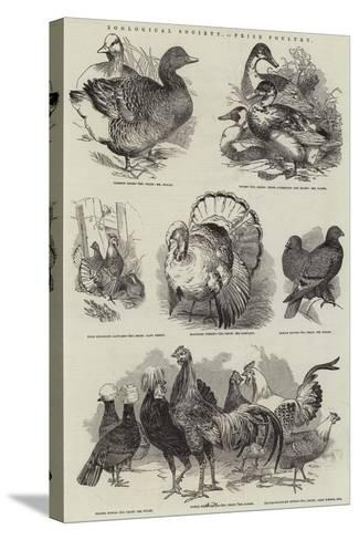 Zoological Society, Prize Poultry--Stretched Canvas Print