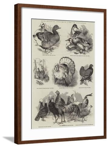 Zoological Society, Prize Poultry--Framed Art Print